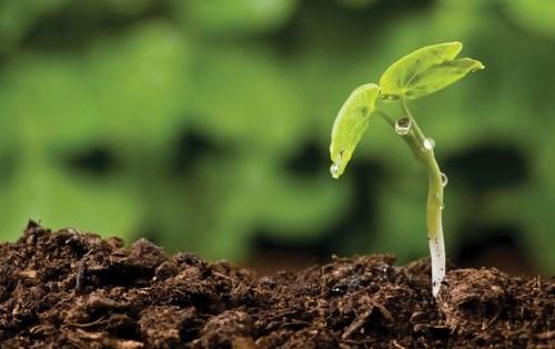 Indigenous Carbon Farming Fund