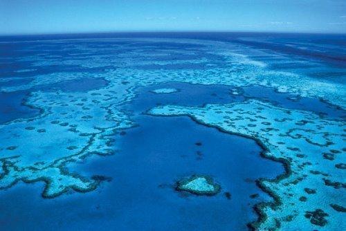 Reef Guardian