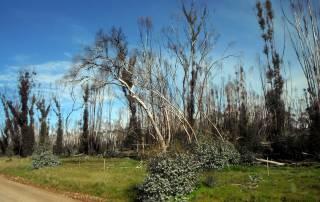 Victorian Bushfires Concessional Loans