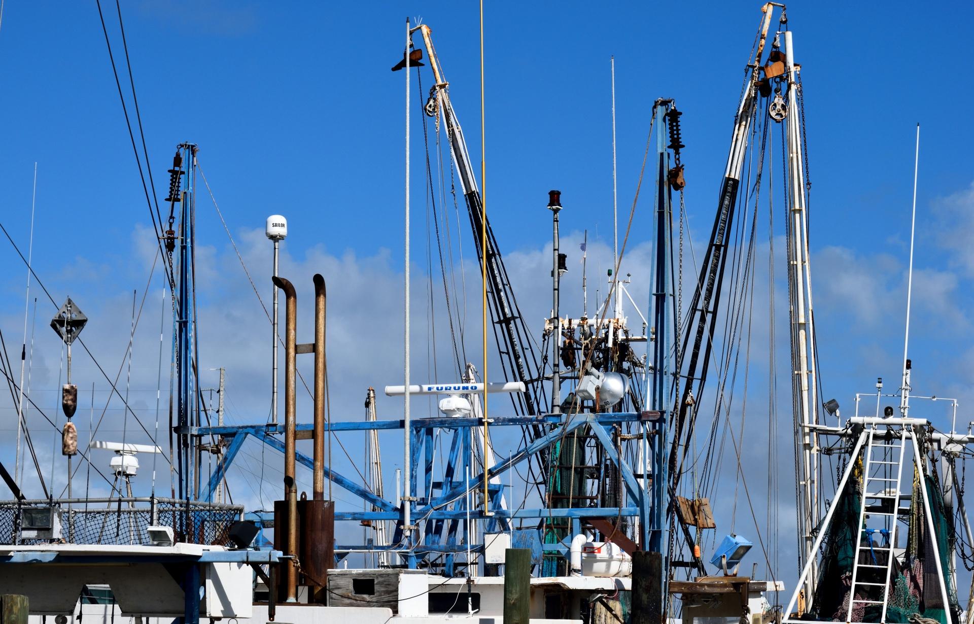 Seafood Innovation Fund