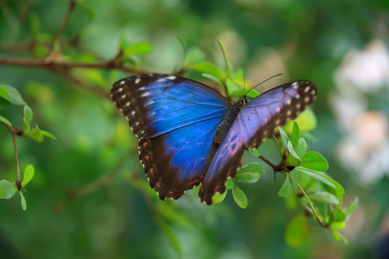 Wildlife and Habitat Bushfire Recovery Program