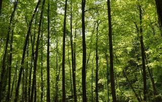 Forestry Business Transition Voucher Program