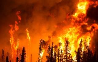 Bushfire Technology Fund