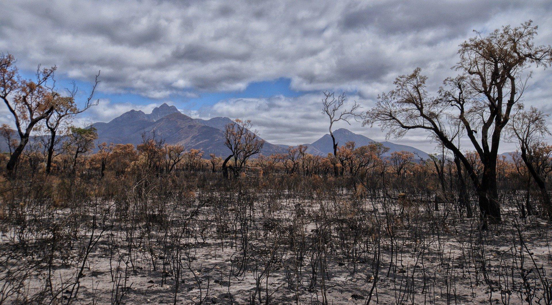 Emergency Bushfire Primary Industries Grant